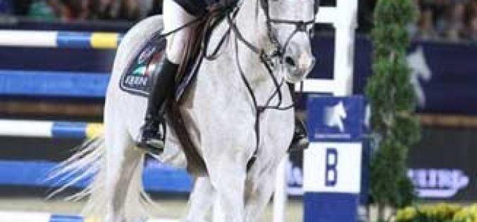 Horses in Focus: Cedric