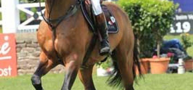 Horses in Focus: Big Star
