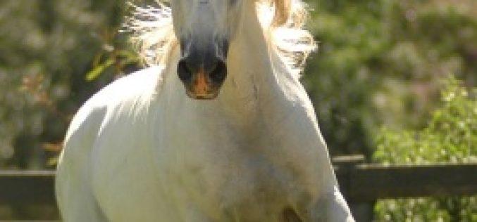 Workshop sobre genómica de cavalos nos Açores
