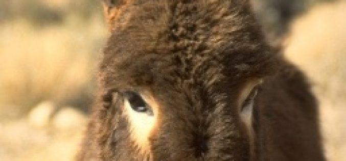 Voluntários transmontanos criam centro de acolhimento para burros