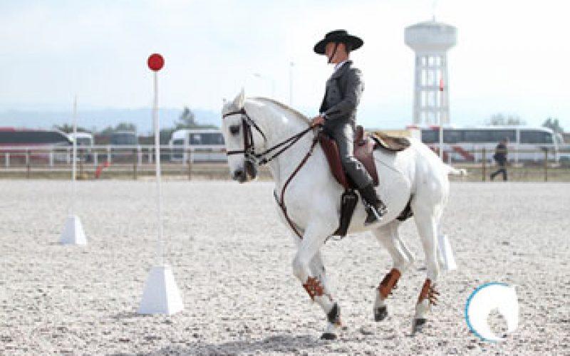 II Jornada do Campeonato Nacional de Equitação de Trabalho 2013 disputa-se na Ovibeja