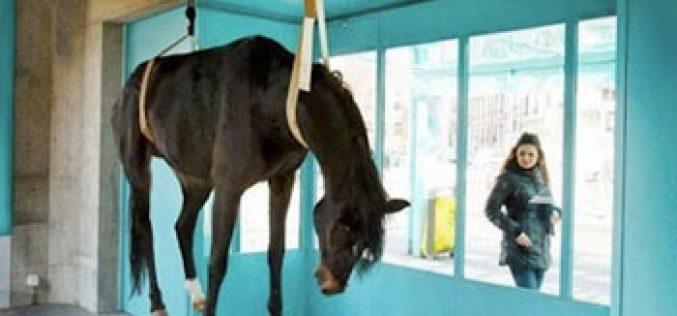 Galeria expõe cavalo morto como peça de arte