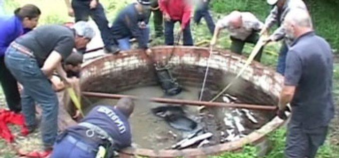 Bombeiros resgatam cavalo do interior de um poço (vídeo)