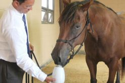 Can Aromatherapy Help Calm Stressed Horses?