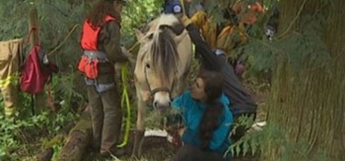 A «horse whisperer» helps save trapped pony