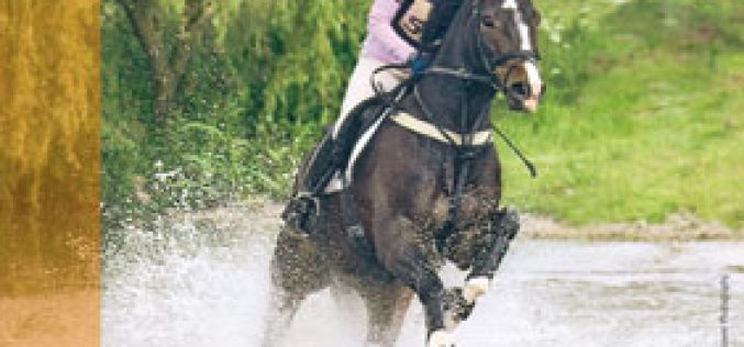 Hanoverian Summer Auction in July in Verden (video)