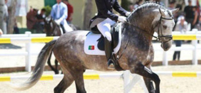 «Coroado AR» apurado para o Campeonato do Mundo de Cavalos Novos de Dressage