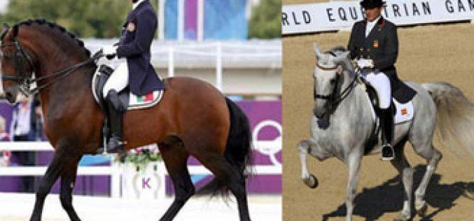 Cavalos Lusitanos e PRE na ribalta no Campeonato da Europa de Dressage na Dinamarca