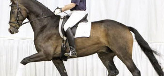 Summer Auction of Hanoverian horses (video)