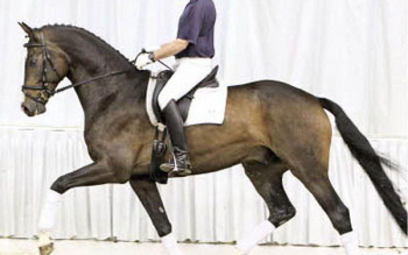 Summer Auction of Hanoverian horses (video)