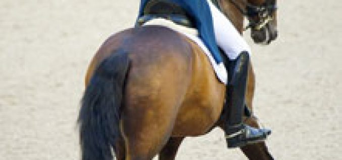 Romanov's Rhapsody – freestyle premiere at 2013 European Dressage Championships in Herning