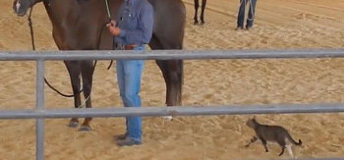 Vídeo de gato a atacar cavalo torna-se viral