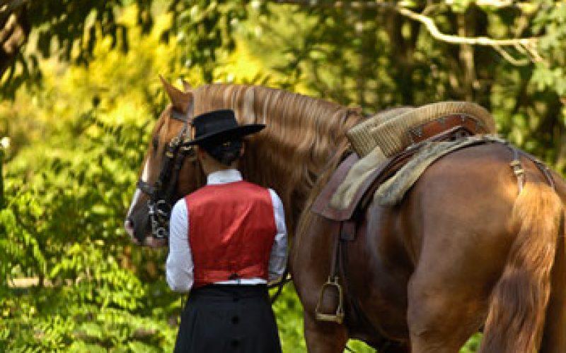 Cavalos são elemento chave da formação