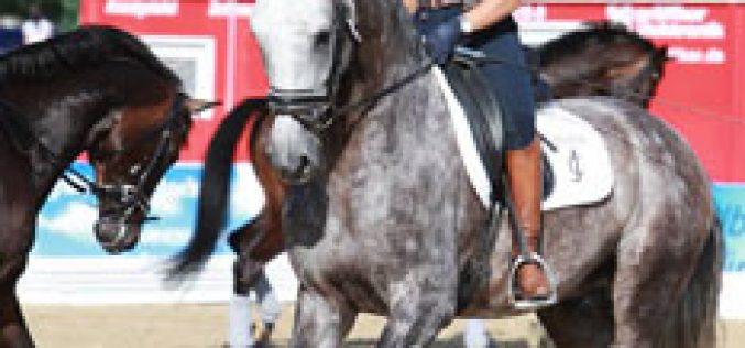 Lusitanos têm participação discreta no Mundial de Cavalos Novos em Verden