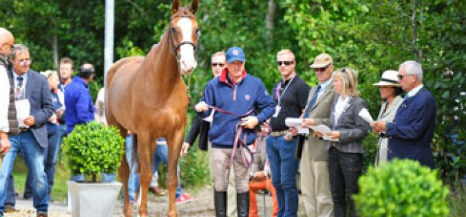 All horses pass First Horse Inspection for PSI FEI European Jumping Championships at Herning