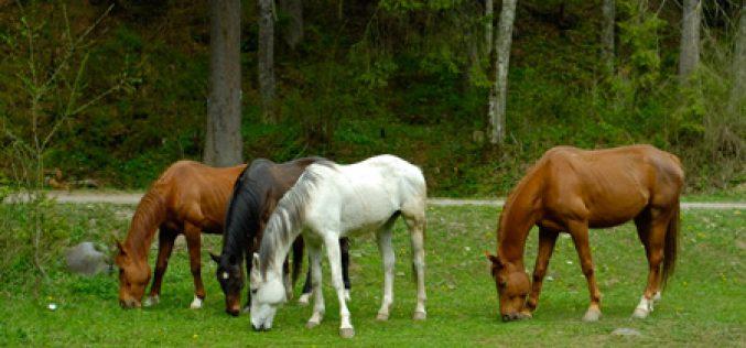 ÉBOLA – Cavalos e milhões estão na solução