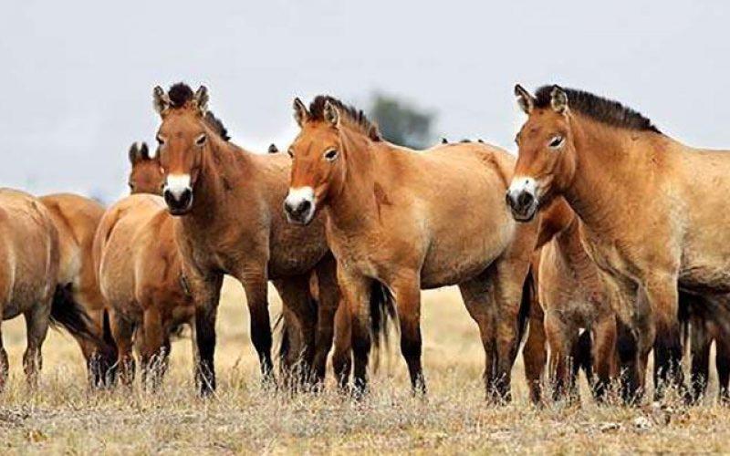 Padrões de Comportamento: quem lidera a manada?