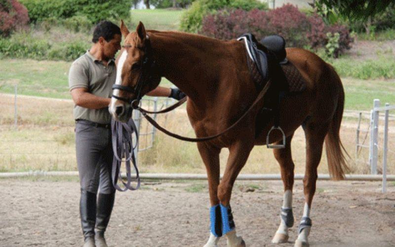 Arte Equestre e sua Influência Biomecânica