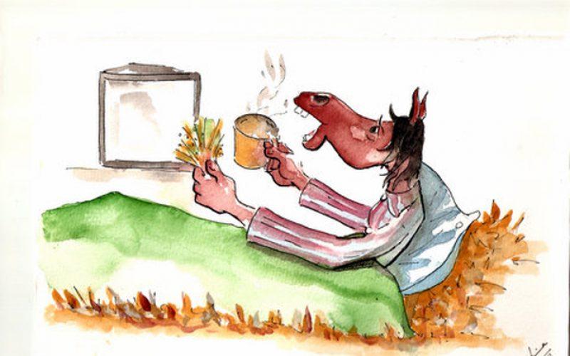 Dica do Mês: À noite o cavalo também precisa de alimento