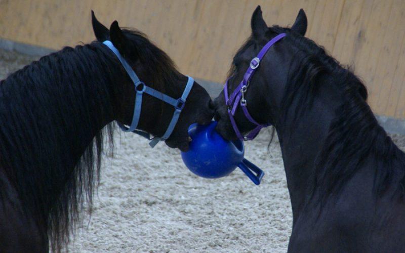 Equus-Dux usa os cavalos como personal trainers