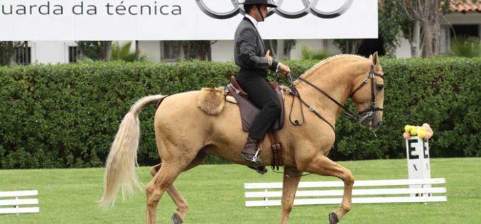 Casa do Olival aposta na Equitação de Trabalho e na Dressage