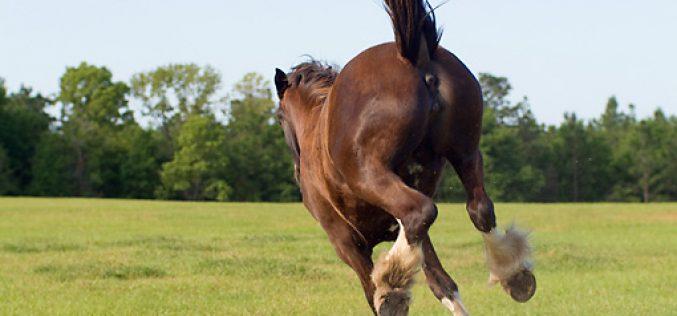 O que diz o cavalo com o corpo ?