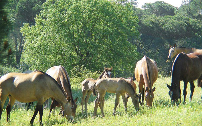 Paula da Silva – Cavalos em foco
