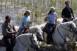 Importância económica do sector equestre