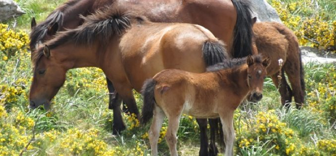 Um cavalo que vem do passado