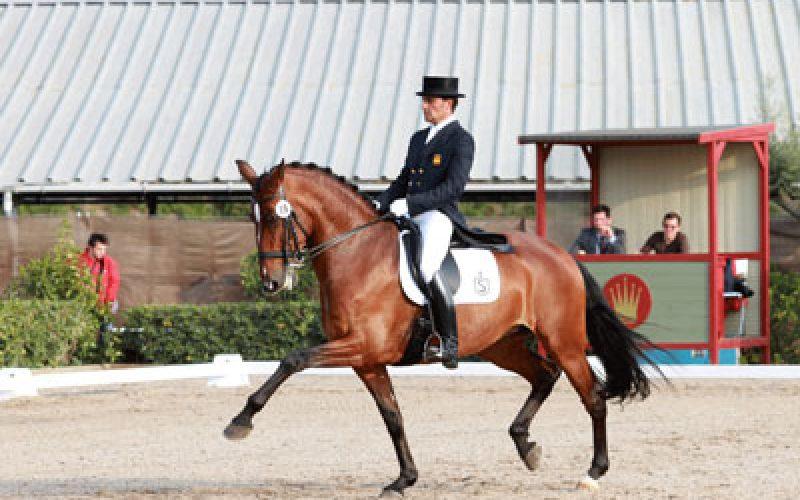CDI3* Madrid: O Cavalo Lusitano em destaque com «Batuta das Figueiras» e «Coroado AR» no comando