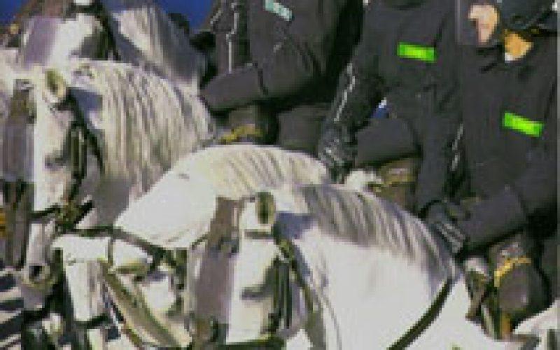 300 cavalos Lusitanos vendidos à Jordânia