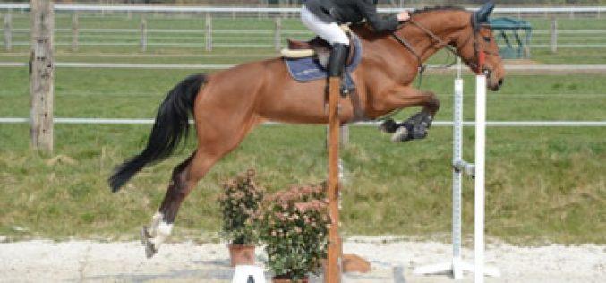 Maria Vozone Vilar conquista segundo lugar do pódio no Mundial de Cavalos Novos em Lanaken