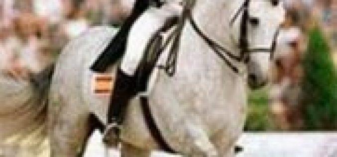 Morreu «Evento» um ícone da Dressage Espanhola (VÌDEO)