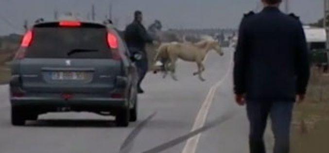 Multas pesadas para cavalos à solta em Albufeira