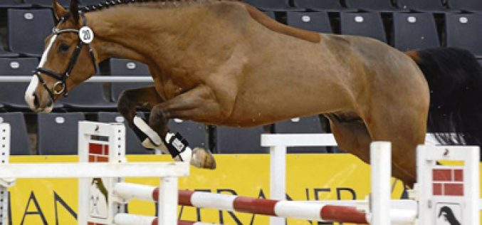 Carrico/Drosselklang II-son wins Free Jumping Test