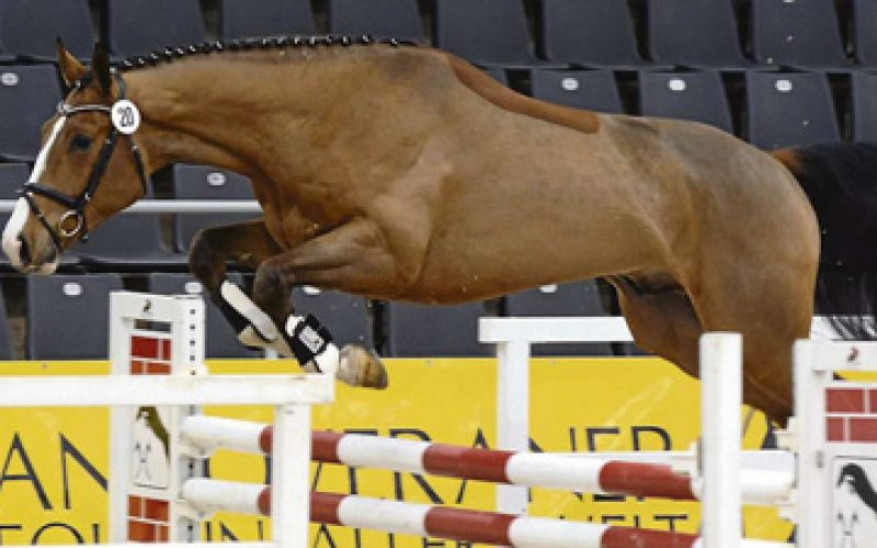 Carrico/Drosselklang II-son wins Free Jumping Test