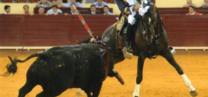 """""""Amoroso"""" melhor cavalo de toureio da temporada 2014"""