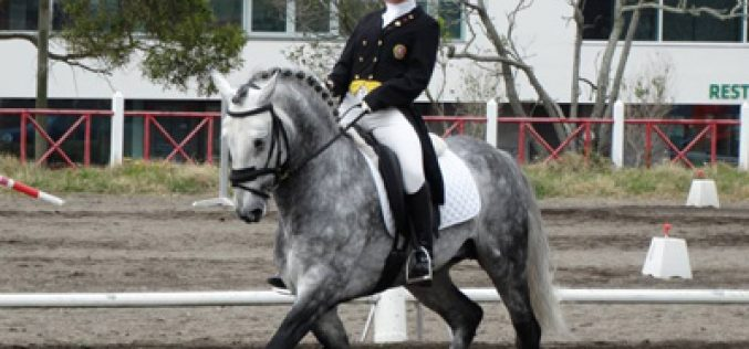 Açores – Dressage – Taça e Campeonato: 3ª Prova de Apuramento