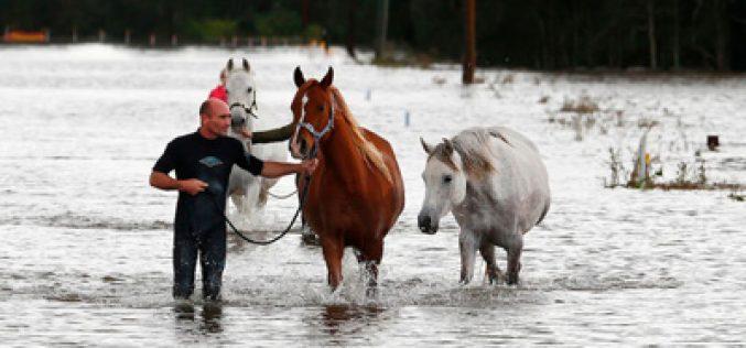 Surfista salva 5 cavalos das inundações na Austrália (VÍDEO)
