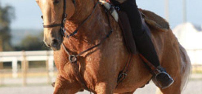 1ª Jornada do Campeonato Nacional de Equitação de Trabalho – Ovibeja