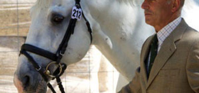 CDI3* Madrid: Os 21 cavalos portugueses passam no vet check