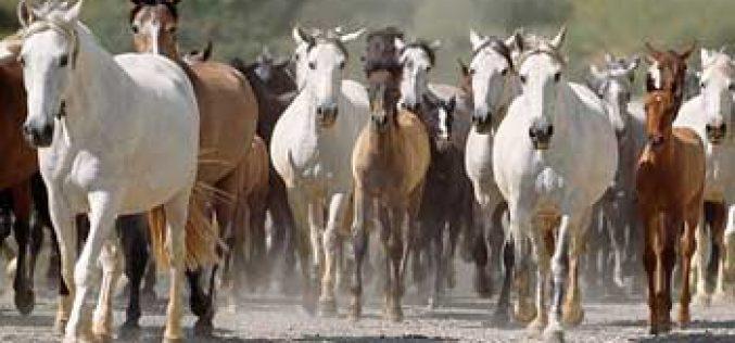 Cavalos: Registo de propriedade com novas regras