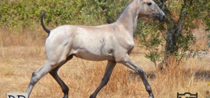 Acordo de sinergia entre criadores do Cavalo Lusitano