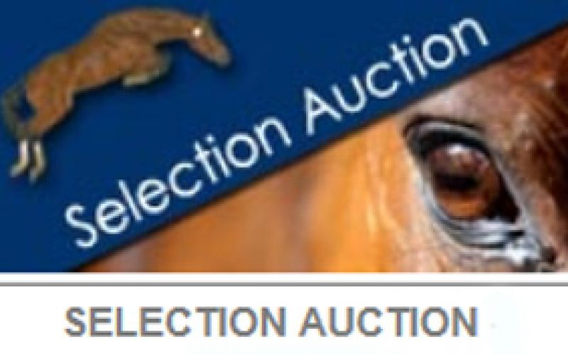 D-7 before the start of the 27th Fences Auctions!