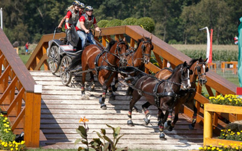 Aachen 2015: Germany's Michael Brauchle and Dutch team claim gold