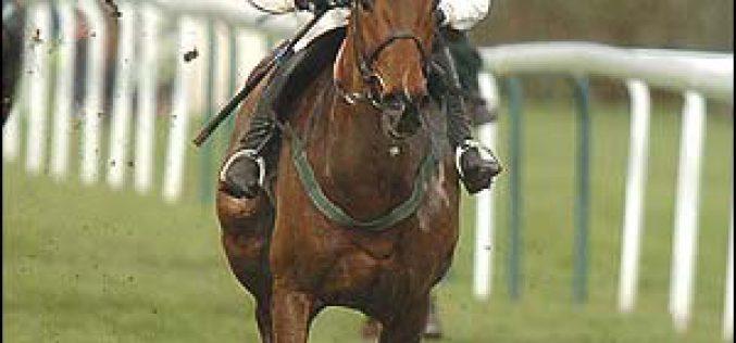 Maia quer ter hipódromo para apostas de cavalos