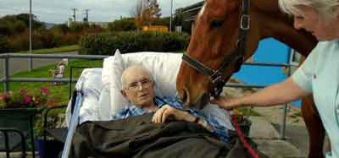 Doente em estado terminal despede-se do cavalo