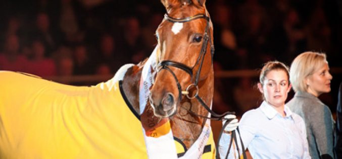 Goldmarie 2015 Hanoverian Mare of the Year
