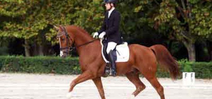 Coimbra: Resultados dos Critérios de Cavalos Novos de Dressage