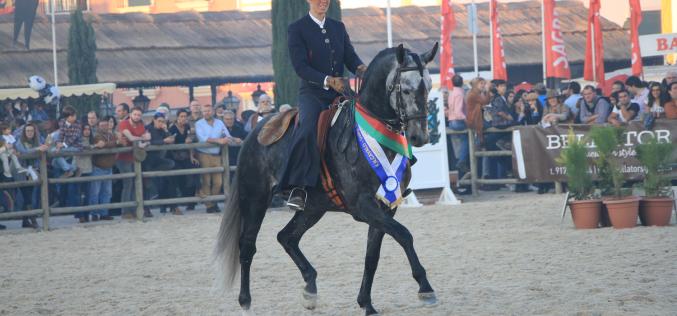 Golegã: «Faisão» o Lusitano Campeão dos Campeões